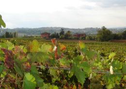 Cascina-Montagnola-Colli-Tortonesi